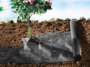 Textilie do skleníků Wenko proti plevelu - 2 x 120 x 300 cm
